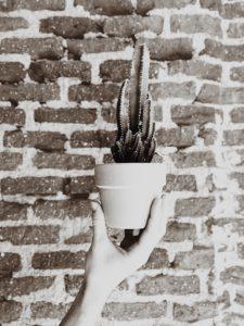 cactus enfrente de la pared